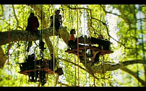 Caravan-arbre-08.jpg