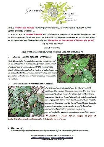 Liste-plantes-2.jpg