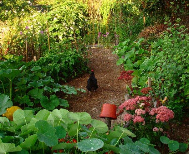 Jardiner selon l thique de la permaculture for Jardin permaculture