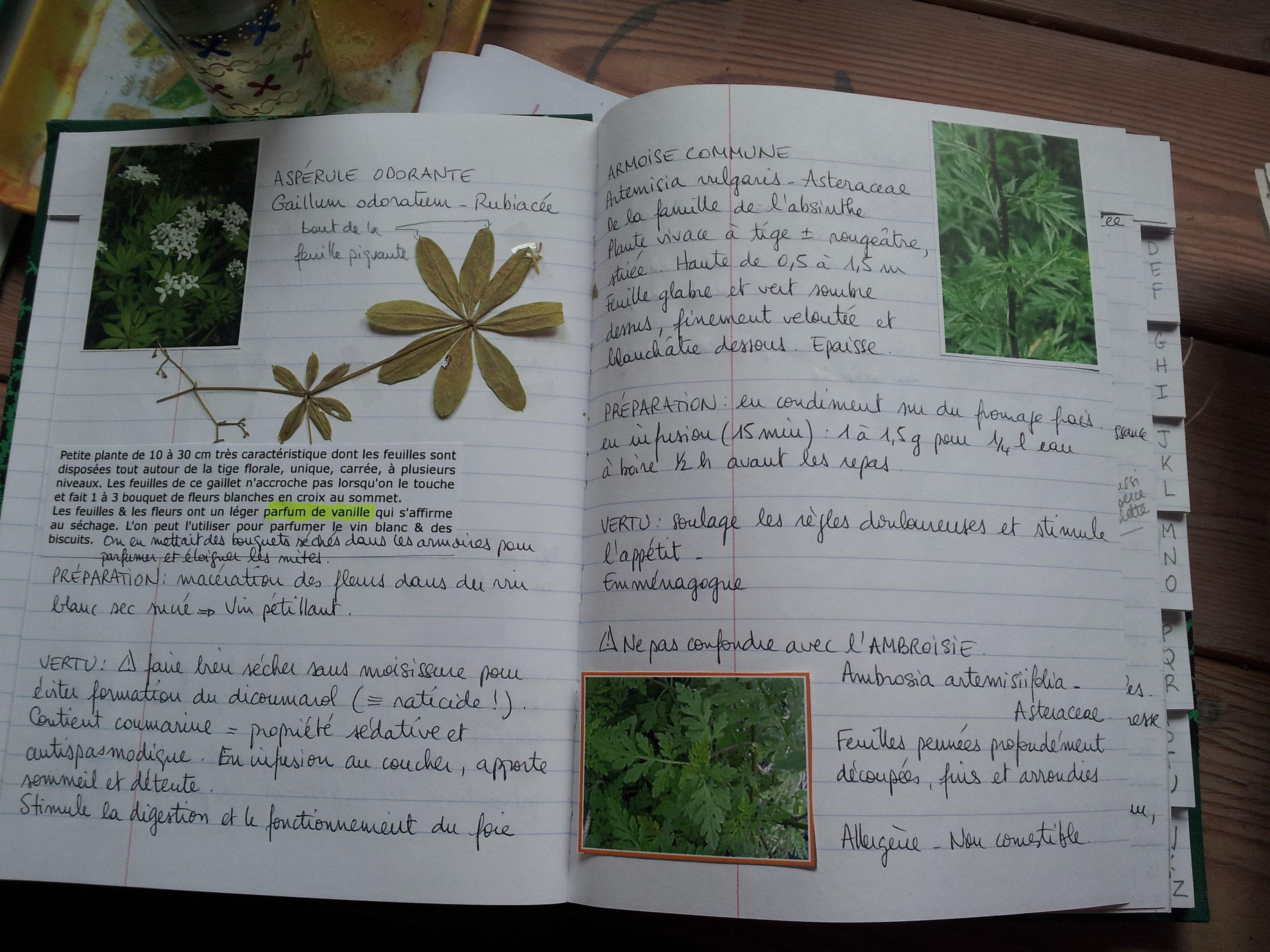 Herbier de Cueillette Portatif
