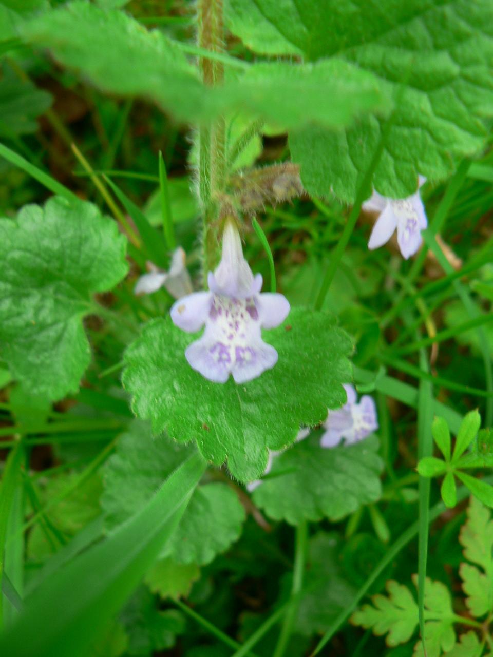 10 crit res pour reconna tre une plante for Plantes belgique
