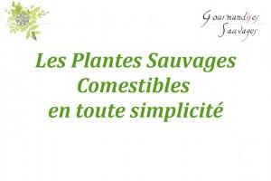 Formation Plantes Sauvages Comestibles en Ligne 10
