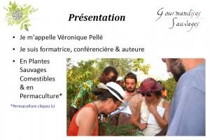 Formation Plantes Sauvages Comestibles en Ligne 12