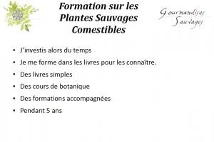 Formation Plantes Sauvages Comestibles en Ligne 17
