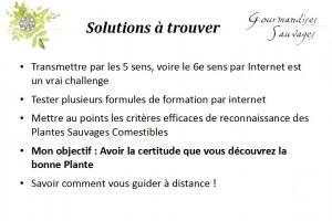 Formation Plantes Sauvages Comestibles en Ligne 19