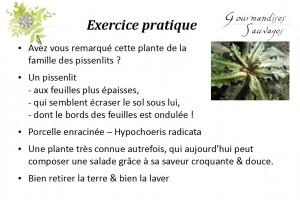 Formation Plantes Sauvages Comestibles en Ligne 212