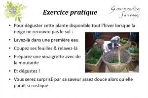 Formation Plantes Sauvages Comestibles en Ligne 214