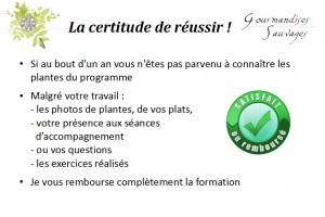 Formation Plantes Sauvages Comestibles en Ligne 218