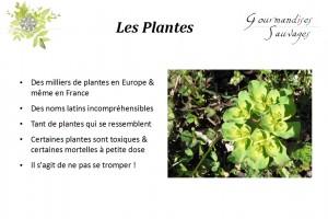 Formation Plantes Sauvages Comestibles en Ligne 22