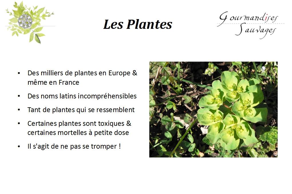 Lancement 2 formation plantes sauvages comestibles en for Plantes en ligne
