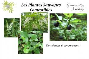 Formation Plantes Sauvages Comestibles en Ligne 23