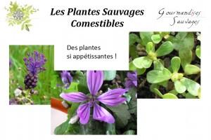 Formation Plantes Sauvages Comestibles en Ligne 24