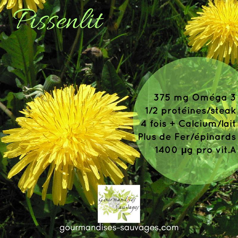 Les Plantes sauvages Comestibles - Pissenlit
