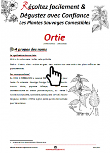 rfdc-monographie-ortie