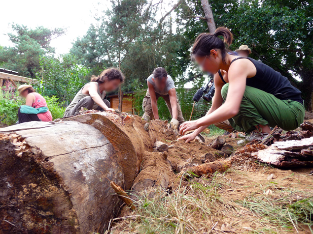 Permaculture nature for Creer une butte en permaculture